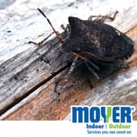 Get rid of stink bugs with Moyer