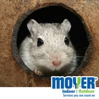 Mouse Infestation In PA