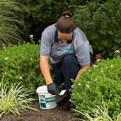 a profestional pest control technitian treating a souderton pennsylvania yard for rodent prevention plan