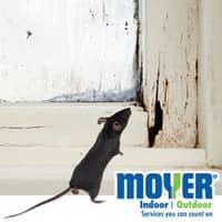 Mouse Entering Pennsylvania Home