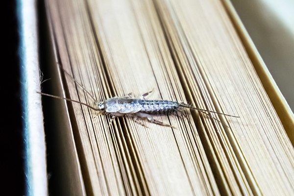 a silverfish on a book