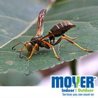 spring pests in pa