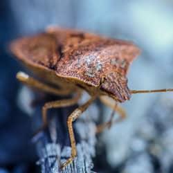 stink bug near telford home