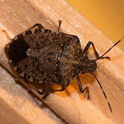 stink bug on a piece of trim