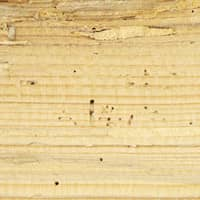 damaged wood by termties