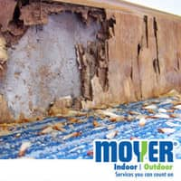 termite damage in west chester pa