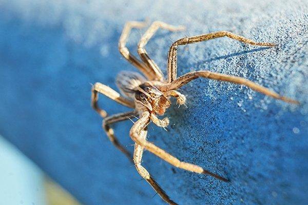 a wolf spider crawling on a balcony railing