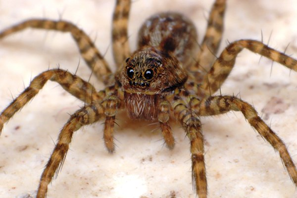 a house spider inside of a home in west chester pennsylvania