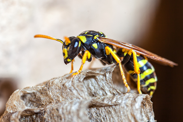 a wasp perched on a branch outside of a home in west chester pennsylvania