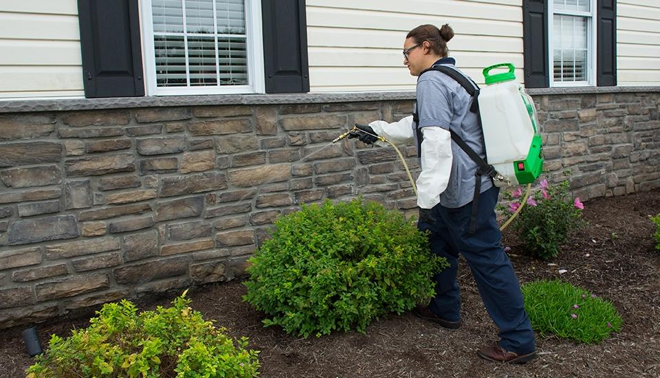 moyer professional performing a stink bug treatment