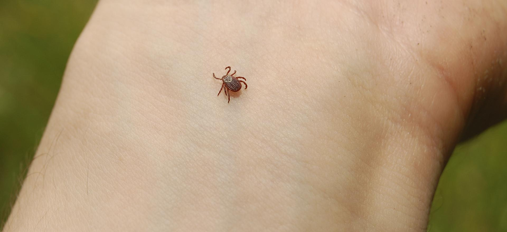 close up of a tick