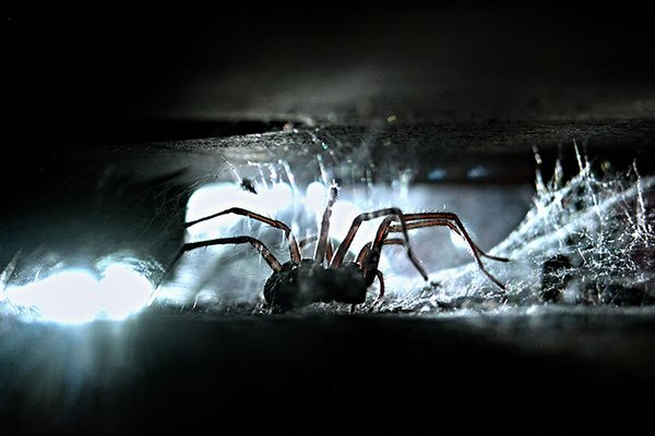 a spider crawling in a cellar inside of a home in souderton pennsylvania