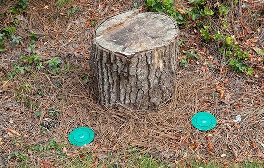 sentricon termite treatment around a tree stump