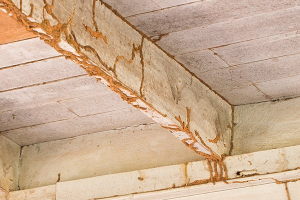 structural damage caused by termites inside of a home in pennsylvania