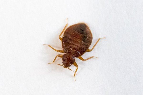 a bed bug crawling on a surface inside of a hotel in pennsylvania
