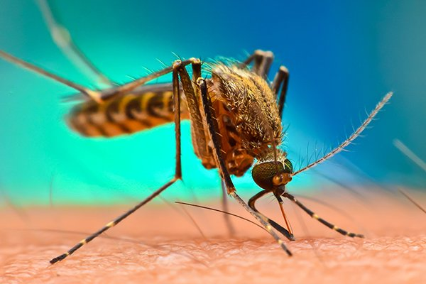 a mosquito biting the neck of a homeowner in west chester pennsylvania
