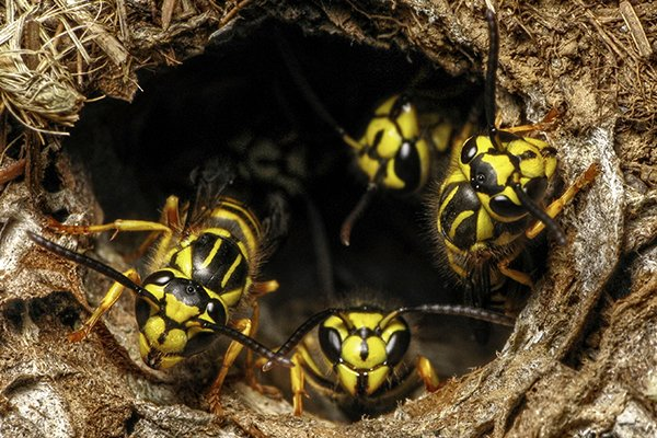 a nest of wasps outside of a home in pennsylvania