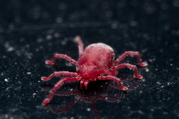 a clover mite crawling on a surface outside of a home in new castle delaware