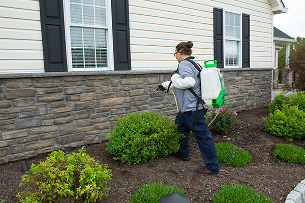 a pest technician spraying the exterior of a home in solebury pennsylvania