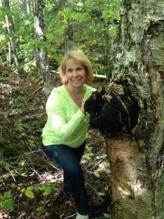 Birch chaga mushroom in the woods of Maine.