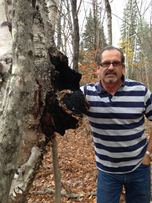 hunting for chaga in maine woods
