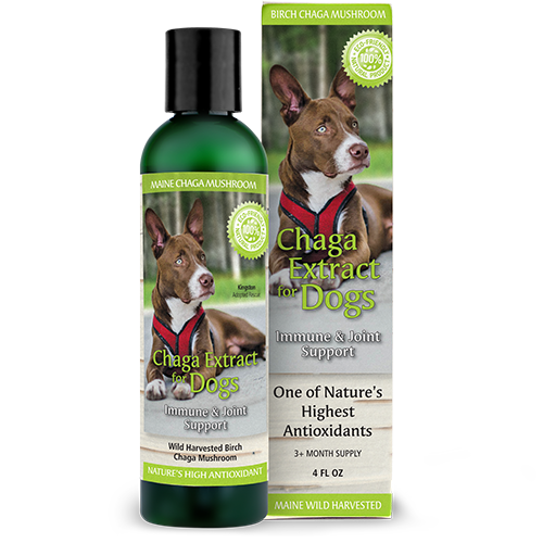 Chaga Extract for Dogs