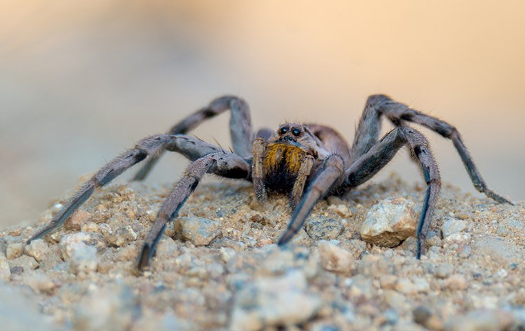 a spider on gravel