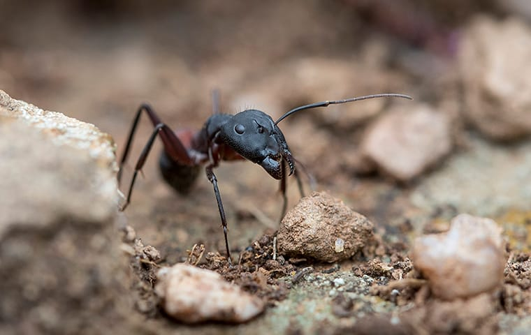 an ant crawling outside of a home in austin texas