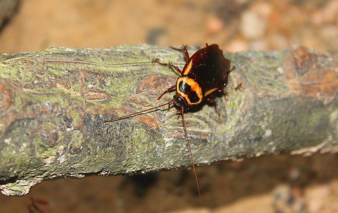 cockroach on tree limb