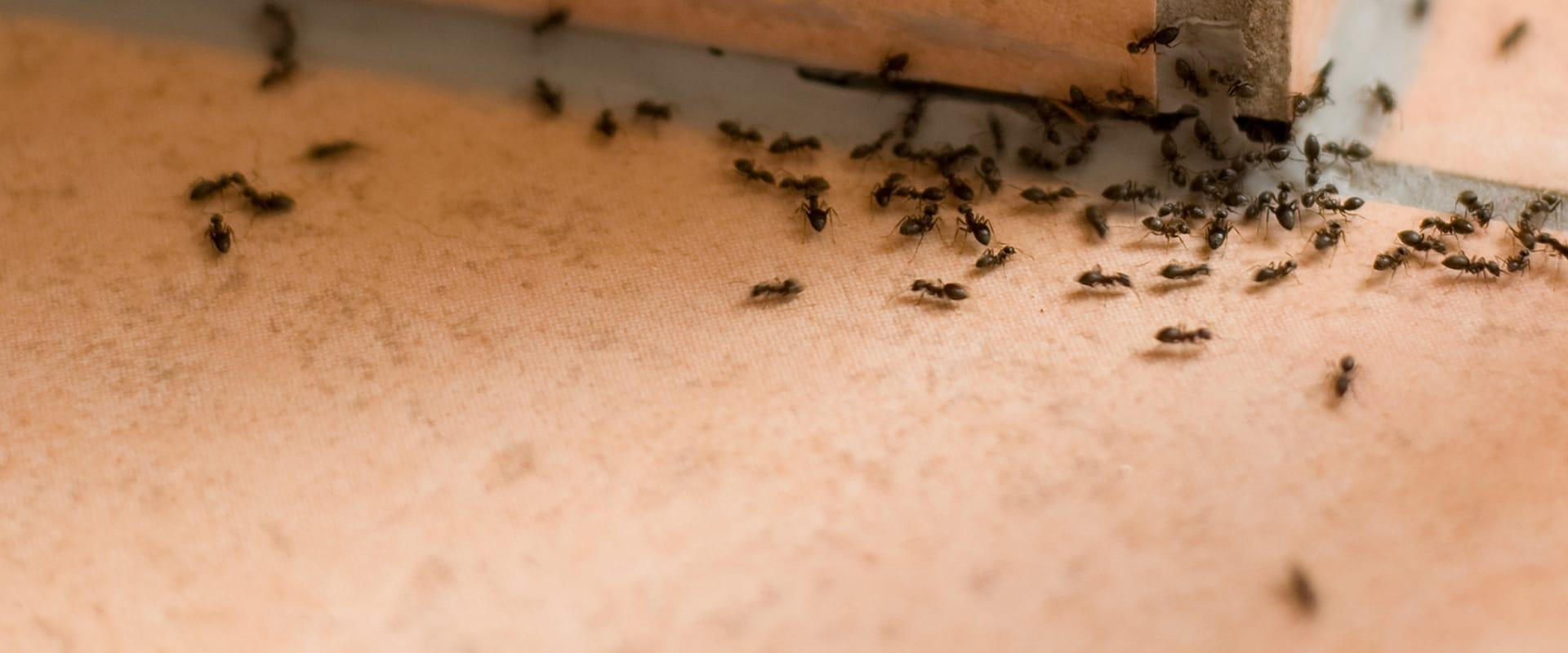 many ants crawling inside of a home in austin texas