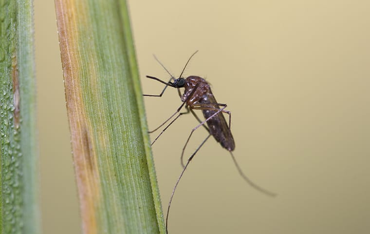 a mosquito on a plant outside of a home in austin texas