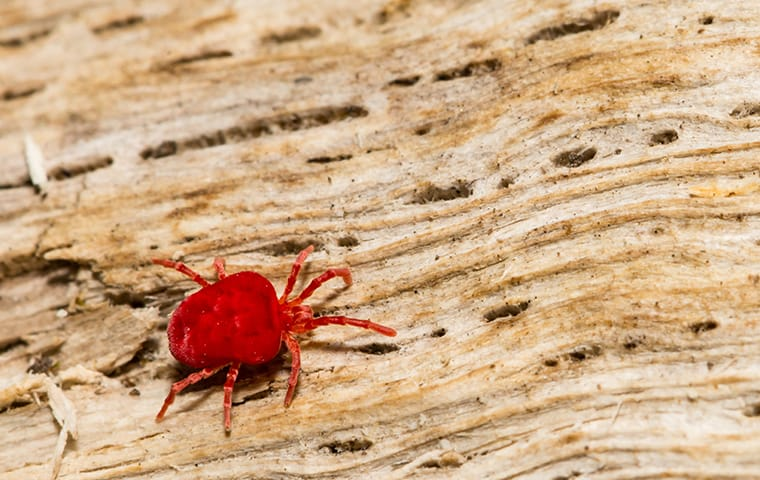a spider mite crawling on a wood pile outside of a home in round rock texas