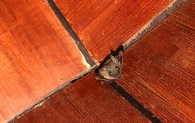 a bat hanging inside of a house