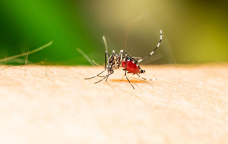 a mosquito biting a person