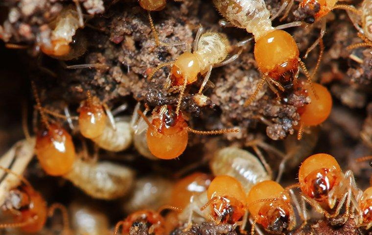 termites damamging a wooden structure in a home