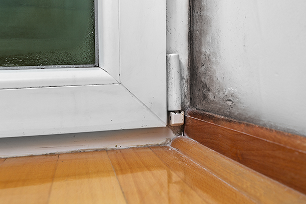 moisture issues cause black mold in VA homes