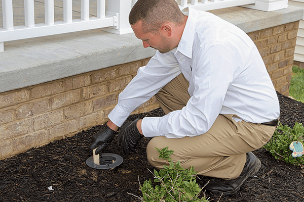 a pest technician checking a termite baiting station outside of a virginia home