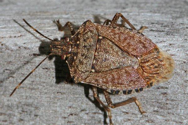 stink bug on a home