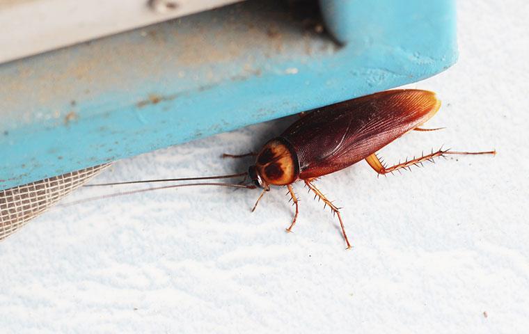 cockroach near a window in a home