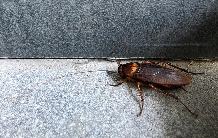 a cockroach crawling in the basement of a home in castaic california
