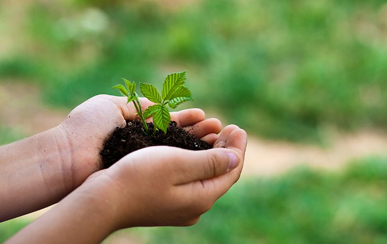 close up of a persons hands holding soil with a small plant in santa clarita california