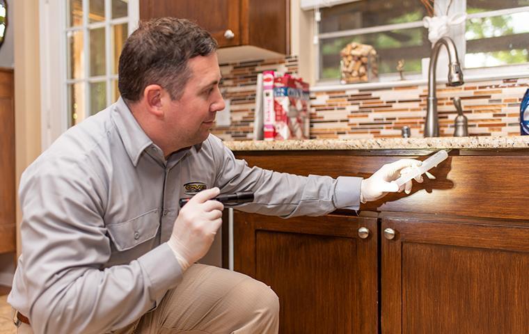 a pest technician treating a kitchen in a home in valencia california