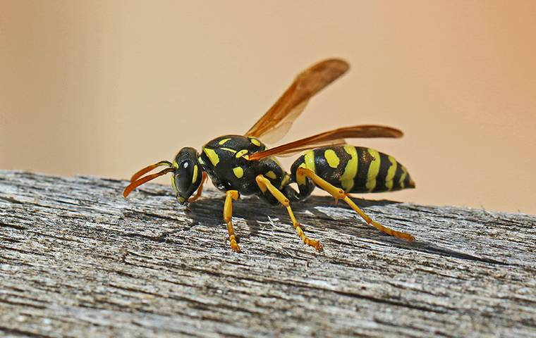a wasp crawling on a fence post