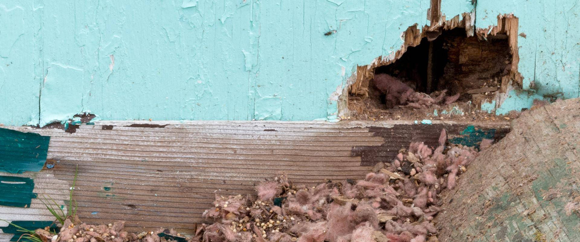 rodent hole in a wall