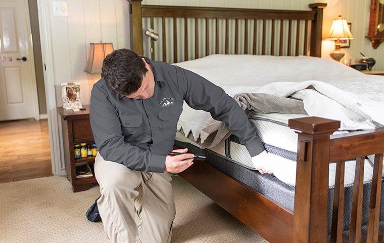 roanoke va pest control tech inspecting bed for bed bugs
