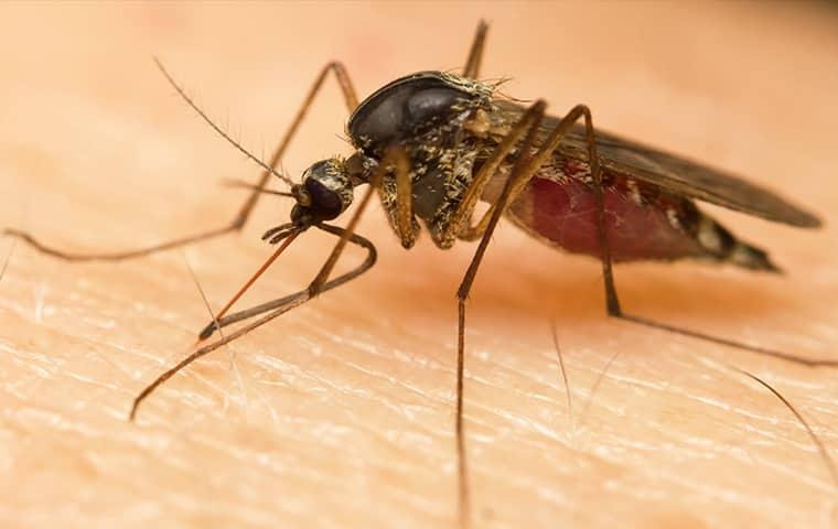 a mosquito on a human