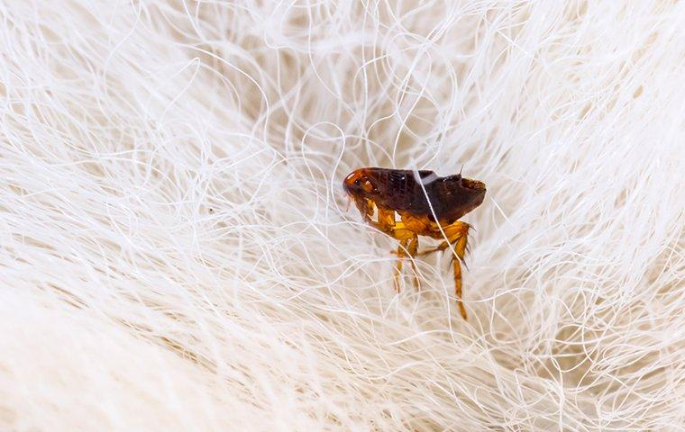 flea biting dog in roanoke va