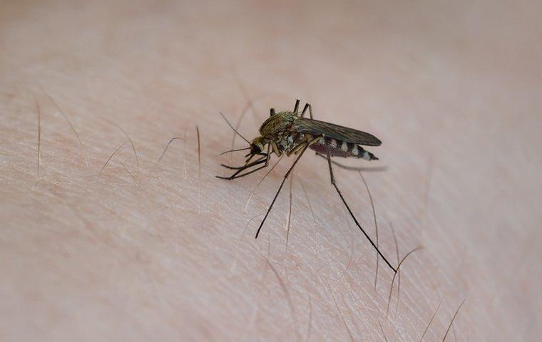 biting mosquito on person in roanoke va
