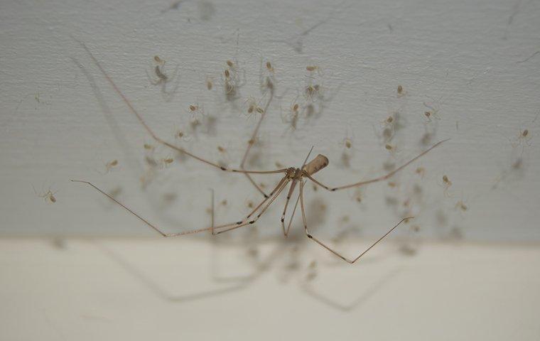 spider web in corner of roanoke va home