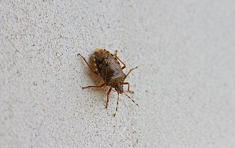 stink bug crawling on exterior of a roanoke va home